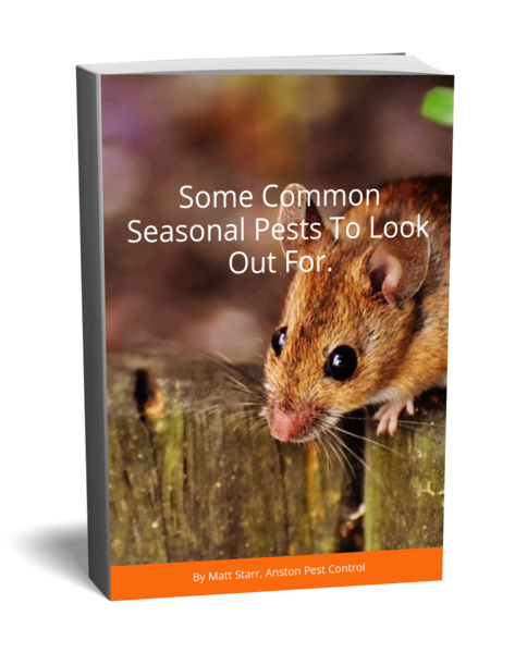 seasonsal pests to look out for from anston pest control