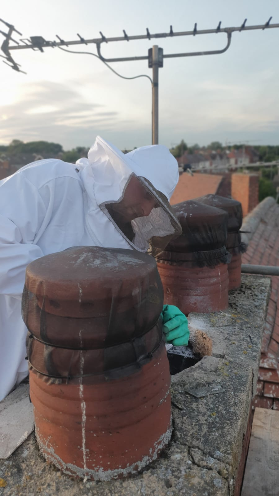 removing a bees nest from a chimney and proofing the site with mesh.