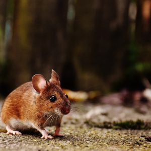 pest control rotherham, problems with mice, ants, cockroaches, moles, rats, squirrels, textile pests and wasps