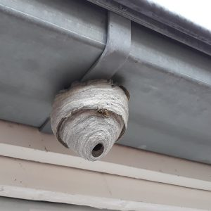 rotherham pest control, problems with wasps