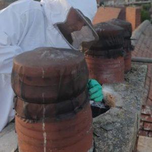 bee pest control