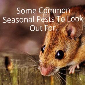 seasonal pest