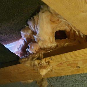 squirrel dray in loft space