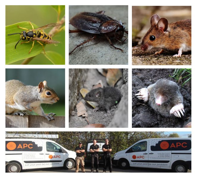 pest control bassetlaw, pest controller in bassetlaw,